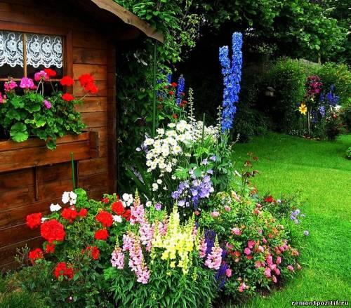 вход в дом на даче растения
