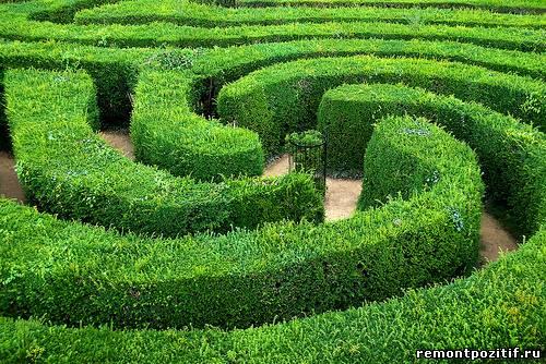 лабиринт из живой изгороди