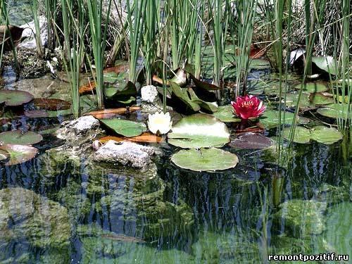 пруд с водными растениями