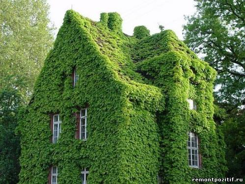 вертикальное озеленение дома полностью