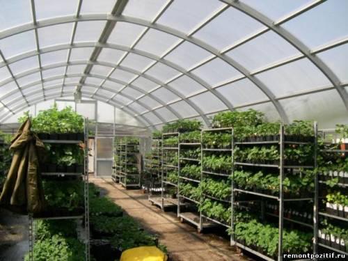 светопрозрачные конструкции на участке для выращивания растений
