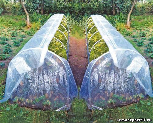 пленочная теплица для выращивания растений