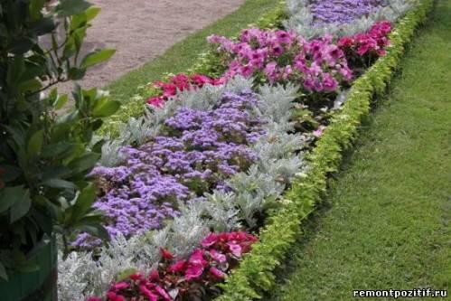 рабатка из цветов