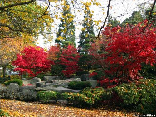 сад деревьев
