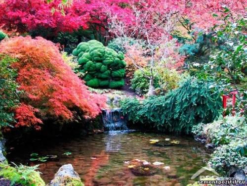 правила создания японского сада деревьев