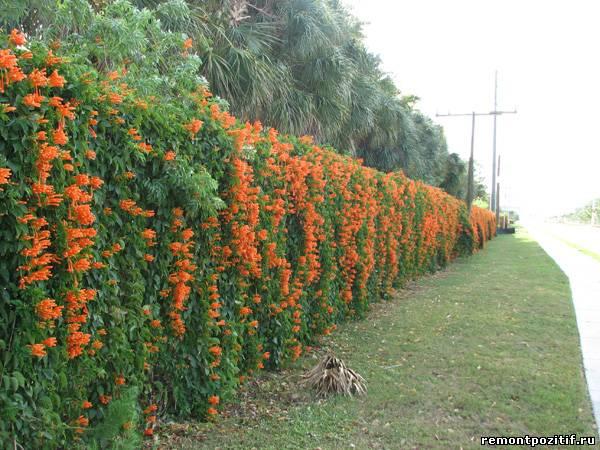 Изгородь на садовом участке изгородь