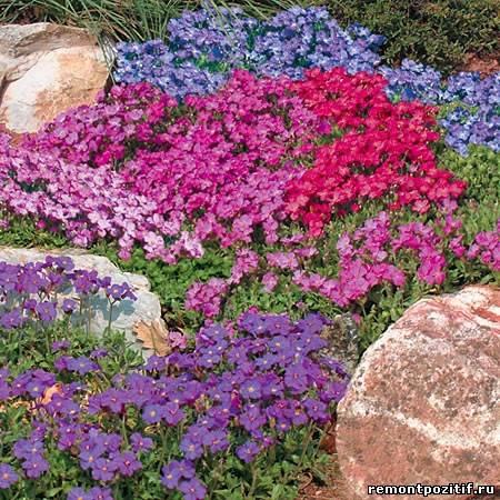 вечнозеленые почвокровные растения