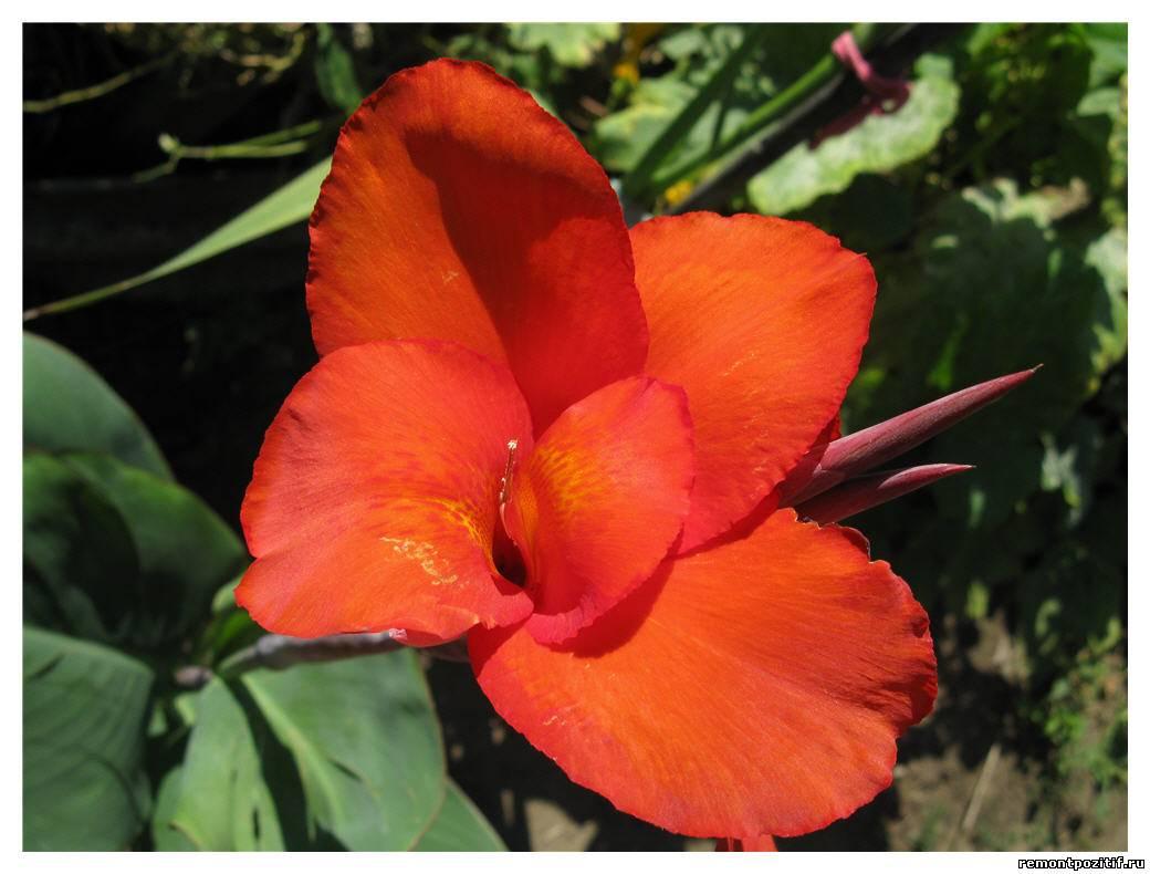 Популярные цветы