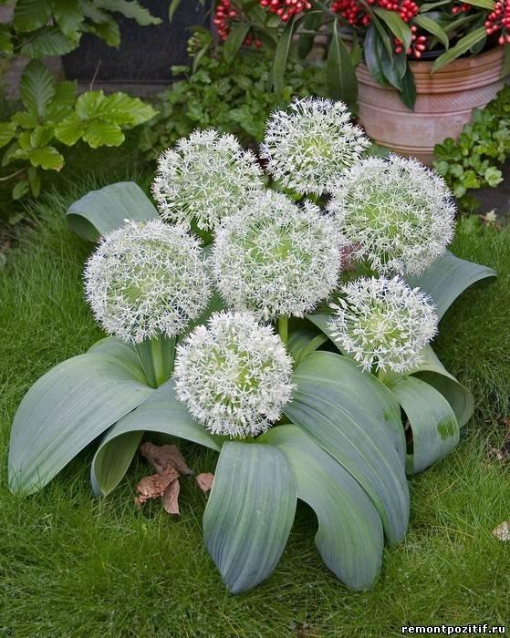Декоративные цветы для сада
