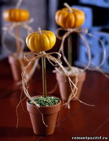 декоративные тыквы в горшках