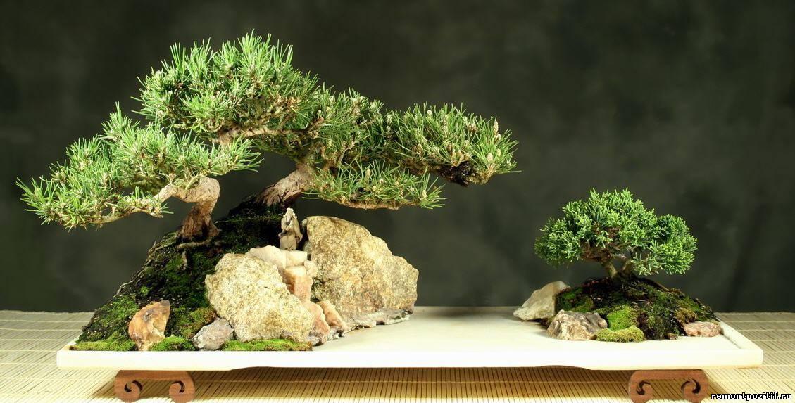 миниатюрный ландшафт