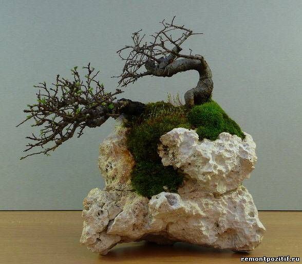 ландшафт в миниатюре