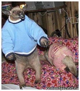 Экзотическое животное в домашних условиях 834