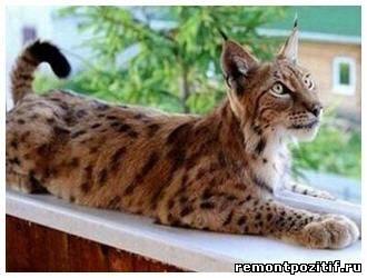 Экзотическое животное в домашних условиях 865