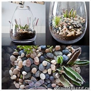 Орхидея ванда фото и описание в